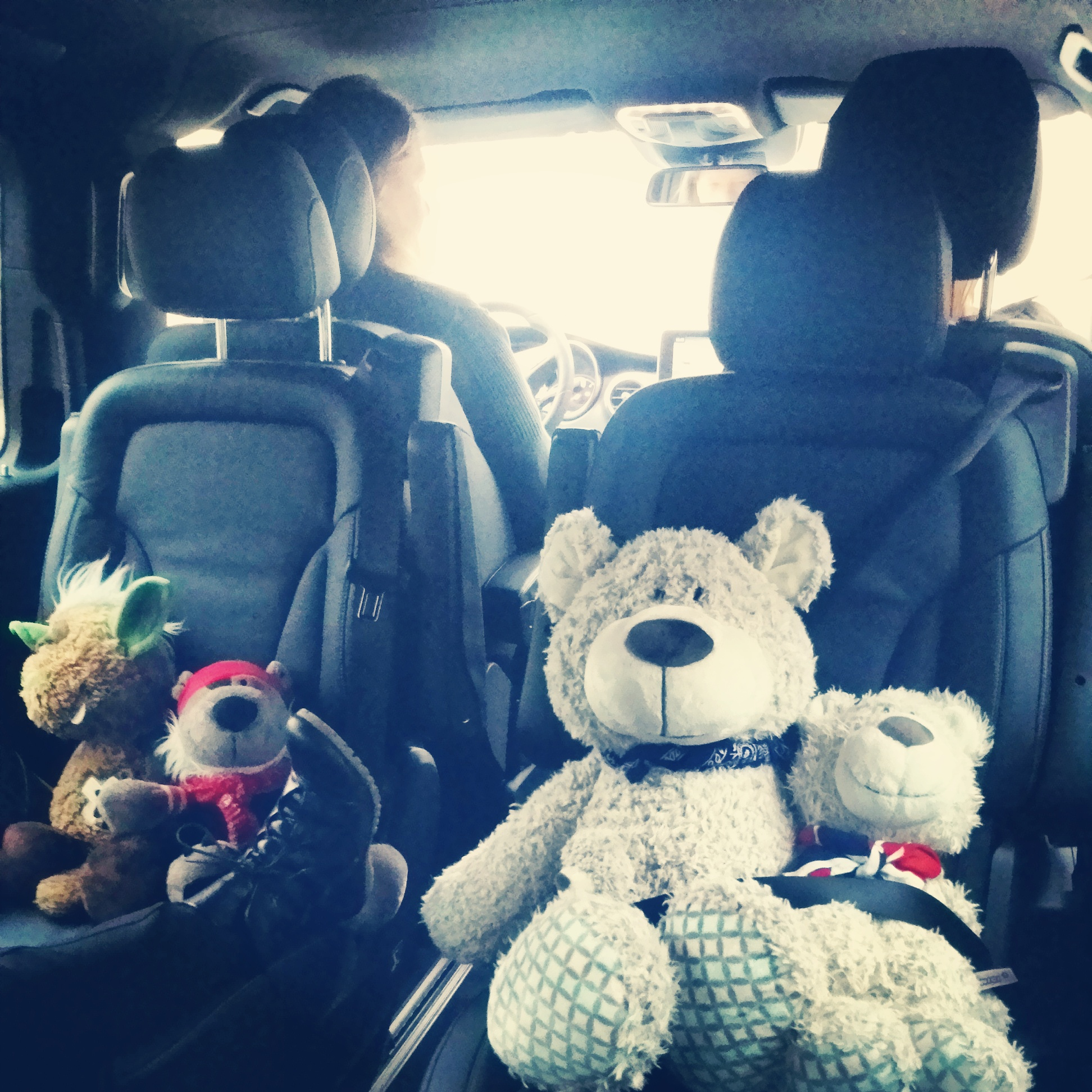 Teddy Transporter