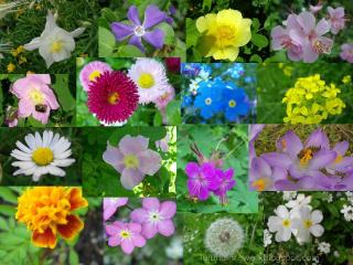 luiundihrewelt.blogspot.com
