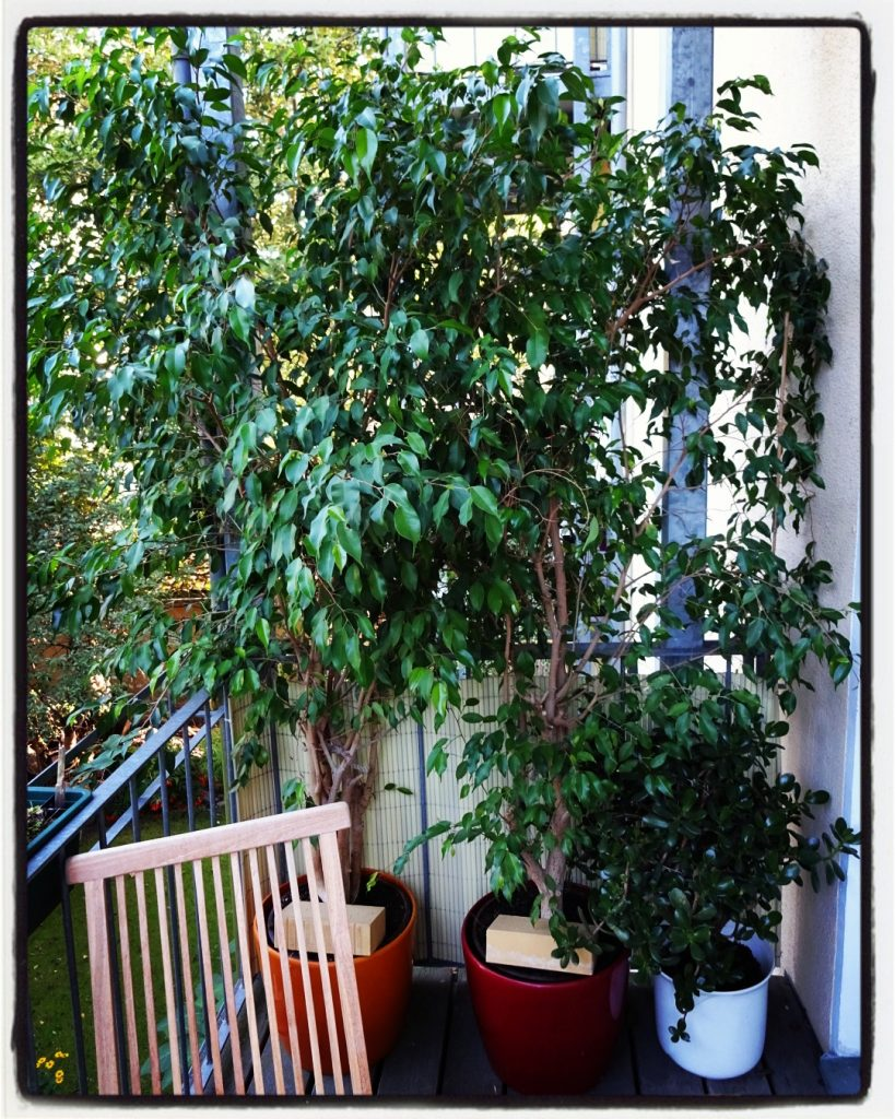 Inhouse- Bäume