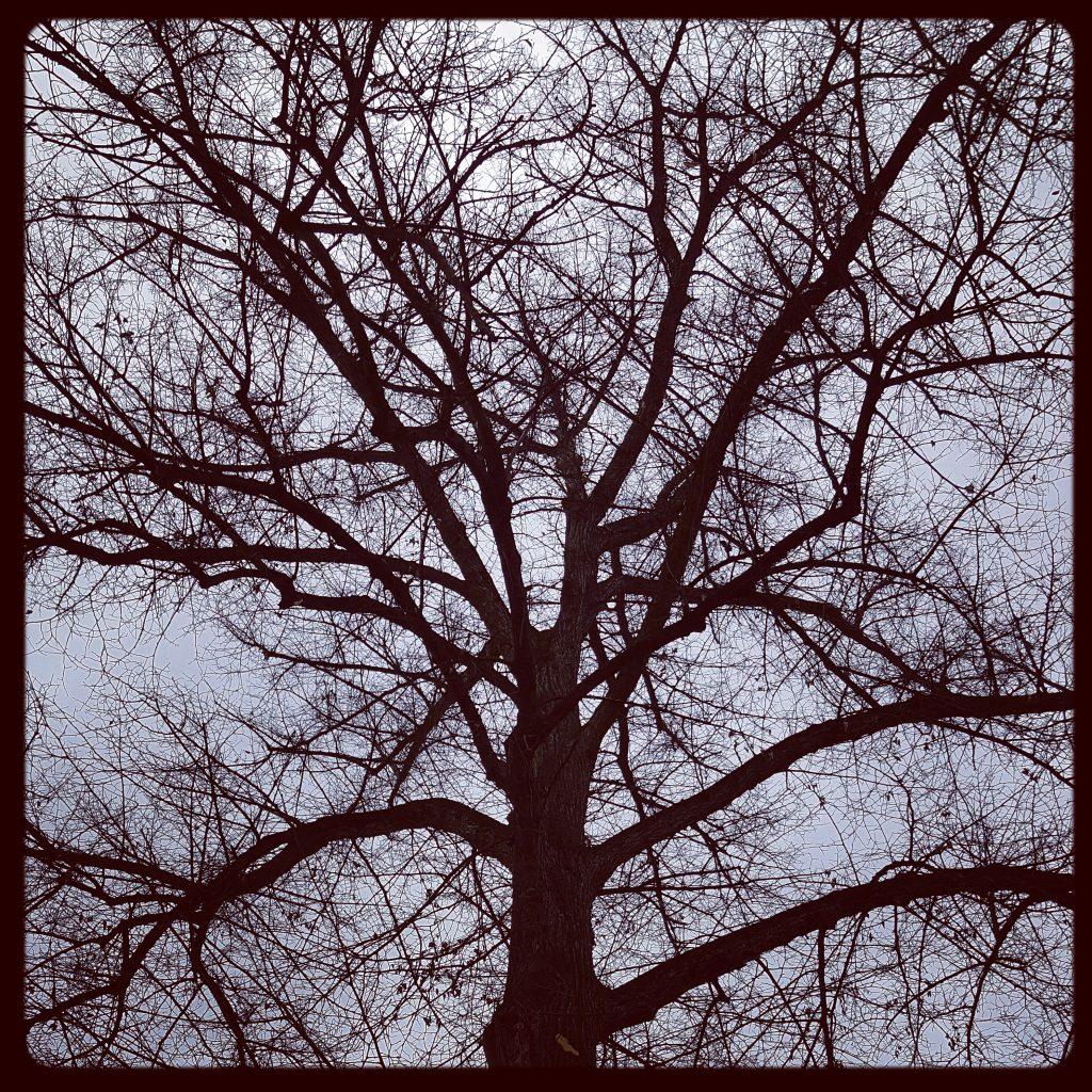 Himmel und Baum